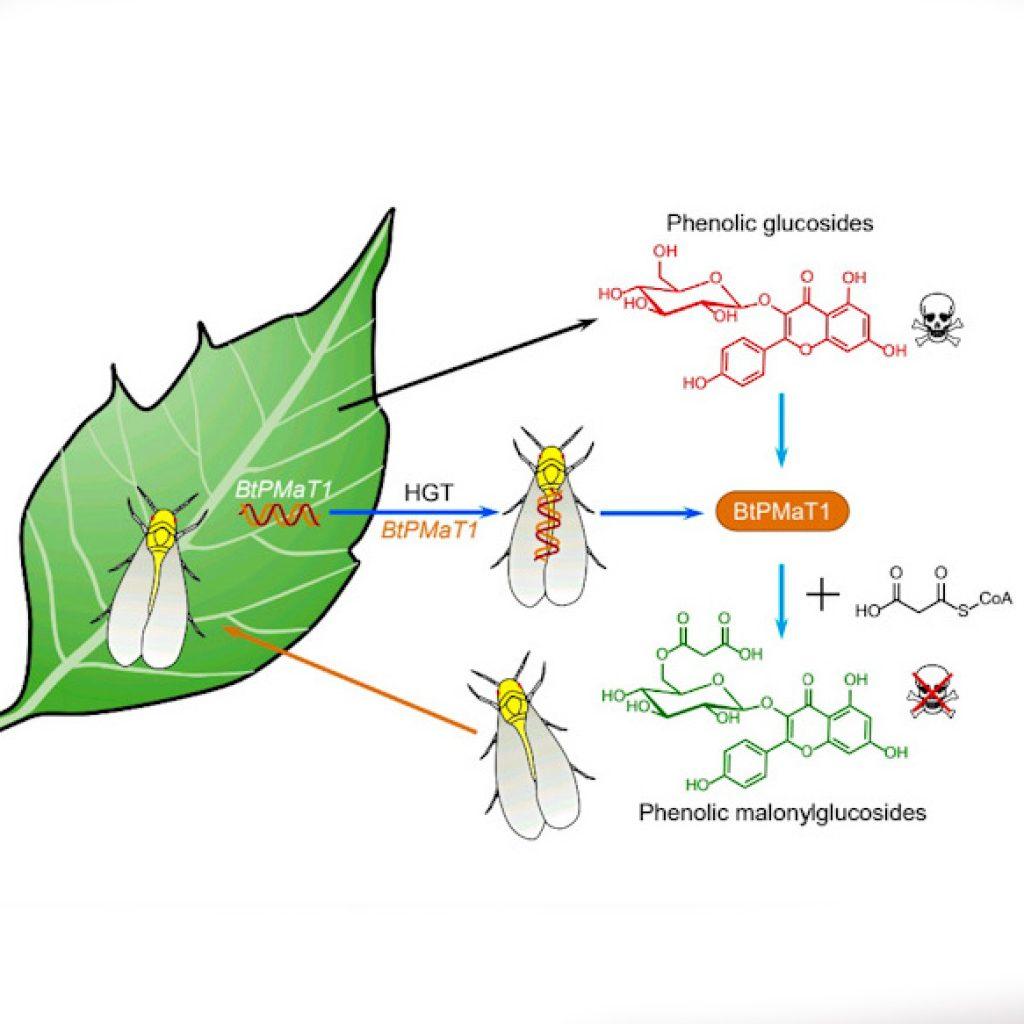 горизонтальный перенос генов от растения к насекомому