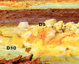 Экстремофилы выжили в марсианских условиях на Земле
