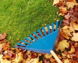 Почему не надо убирать опавшую листву с лужайки
