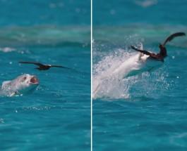Рыба ловит птицу: удивительное видео