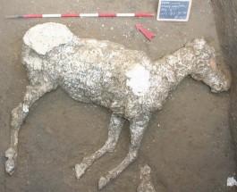 Лошадь из Помпей
