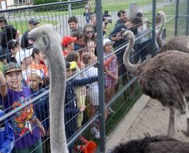 В «Межигорье» открылся детский лагерь