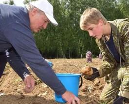 Как Лукашенко картошку собирал