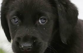 Как собаки манипулируют людьми