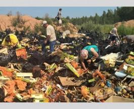 Россияне бросились собирать выброшенные санкционные продукты: Пойдут на самогон