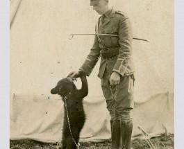Винни (впоследствии Пух) и капитан Гарри Колберн