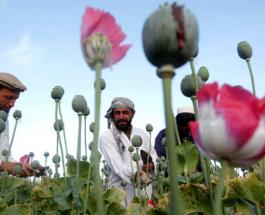 Афганская тропа Кремля или ради нескольких граммов «стирального порошка»