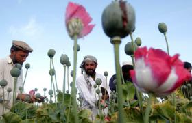 """Афганская тропа Кремля или ради нескольких граммов """"стирального порошка"""""""