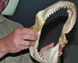 Ученые хотят «разбудить» ген, отвечающий за рост зубов