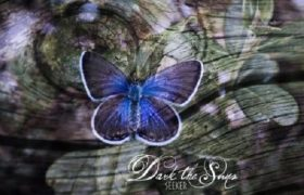 Dark The Suns — Seeker