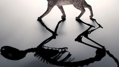 Ученые выяснили воздействие квантового эффекта Зенона на кота Шредингера