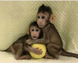 Чем клонированные животные отличаются от обычных