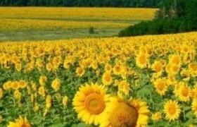 Украина вошла в топ-10 экспортеров пищевой продукции в Евросоюз