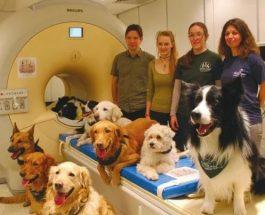 Научно доказано, что собаки понимают человеческий язык