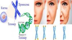 Могут ли физические упражнения замедлить старение ДНК?