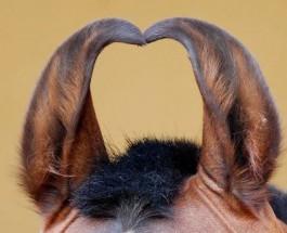 Русские уши «плана Даллеса»