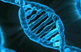 Откуда у людей появилась мусорная ДНК