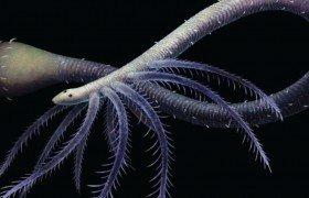 Найдены останки первого животного, утратившего части тела в ходе эволюции
