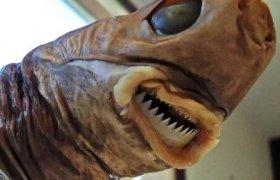 Чем питаются самые страшные акулы в мире
