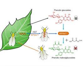 Биологи впервые обнаружили горизонтальный перенос генов от растения к насекомому