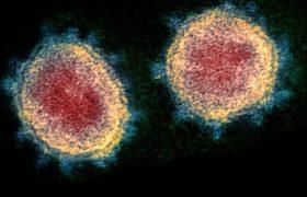 У ДНК людини знайшли сліди епідемії коронавірусу, що спалахнула близько 20 тис. років тому