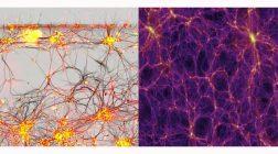 Чем объясняется сходство между мозгом человека и Вселенной?