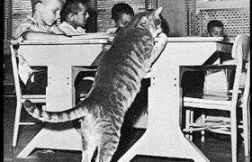 Кот по имени Класс Восемь