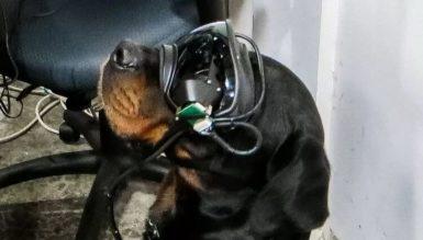Для чего нужны собакам очки дополненной реальности?