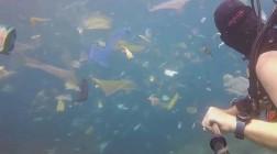 Что мы натворили: пластиковое море у берегов Бали